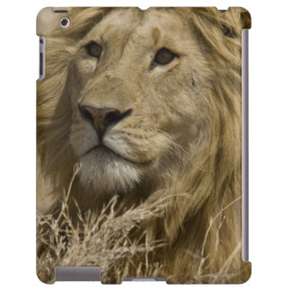 León africano, Panthera leo, retrato de a Funda Para iPad