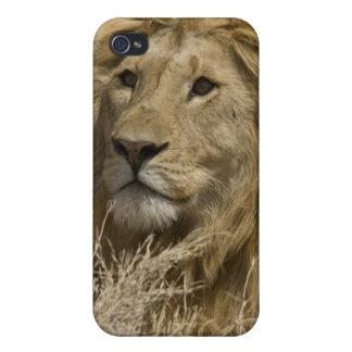 León africano, Panthera leo, retrato de a iPhone 4/4S Carcasas