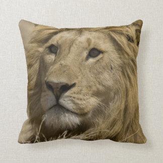 León africano Panthera leo retrato de a