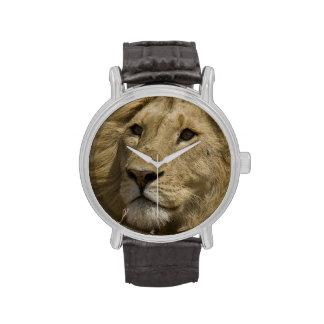 León africano, Panthera leo, retrato de a Reloj De Mano