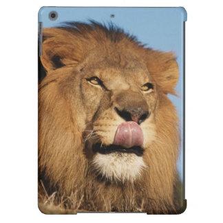 León africano (Panthera Leo), sabana africana Funda Para iPad Air
