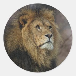 León africano pegatina redonda