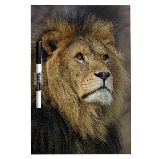 León africano pizarras