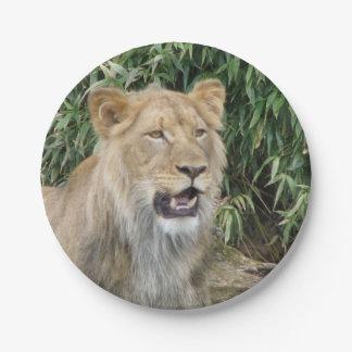 León africano plato de papel de 7 pulgadas