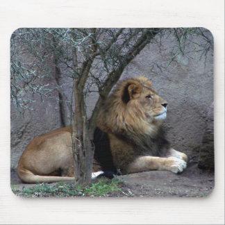 león africano por el árbol tapetes de raton