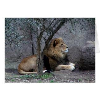 león africano por el árbol tarjetón