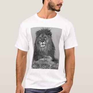 León africano que descansa sobre el acantilado de playera