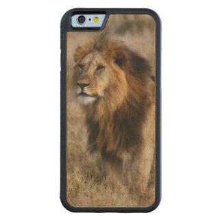 León africano salvaje en el caso de madera del funda de iPhone 6 bumper arce