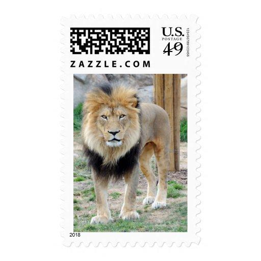 León africano sello