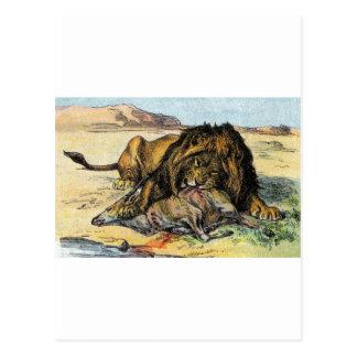 León africano tarjetas postales