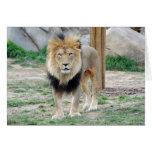 León africano tarjetón