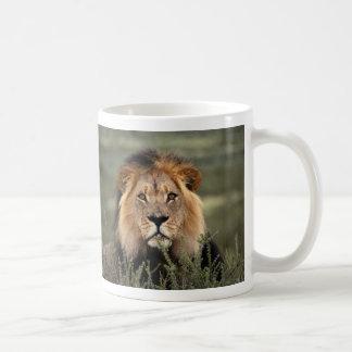 León alerta taza de café