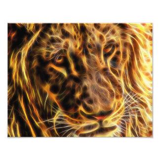 León apacible, papel de la foto por los gráficos fotografía