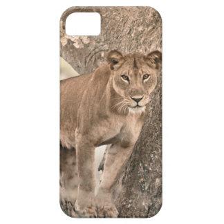 león Árbol-que sube Uganda África iPhone 5 Coberturas