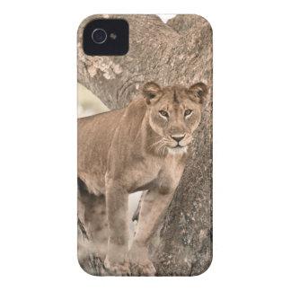 león Árbol-que sube Uganda África Case-Mate iPhone 4 Protectores