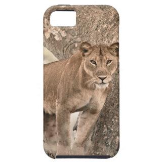 león Árbol-que sube Uganda África iPhone 5 Case-Mate Coberturas