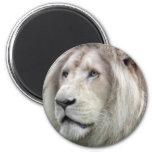 León blanco imán de frigorífico