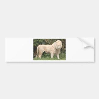 León blanco majestuoso pegatina de parachoque