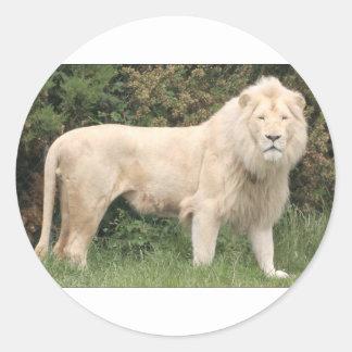 León blanco majestuoso pegatina redonda