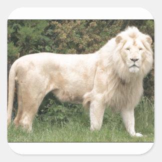 León blanco majestuoso pegatina cuadrada