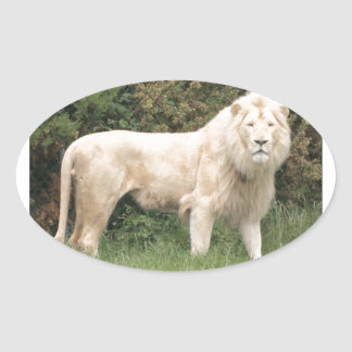 León blanco majestuoso pegatina ovalada