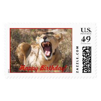 ¡León, boca abierta, Kenia, feliz cumpleaños! Franqueo