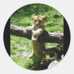 León Cub del bebé en rama Etiquetas Redondas