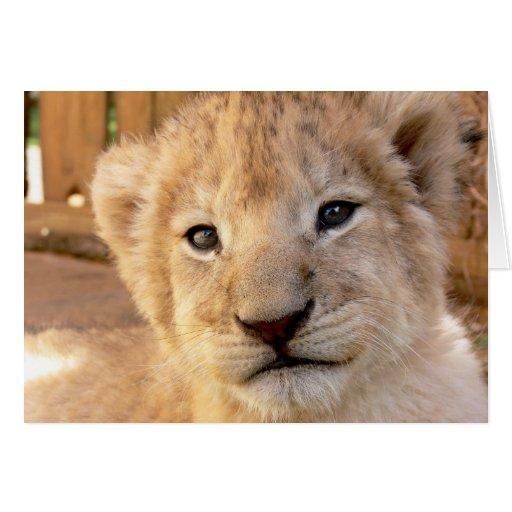 León Cub lindo Tarjeta De Felicitación
