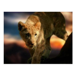 León Cub Postales