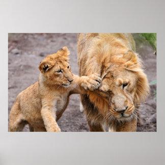 León Cub que juega con su padre Posters