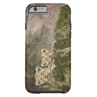 León Cubs que mira a escondidas sobre roca Funda De iPhone 6 Tough