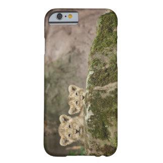 León Cubs que mira a escondidas sobre roca Funda Para iPhone 6 Barely There