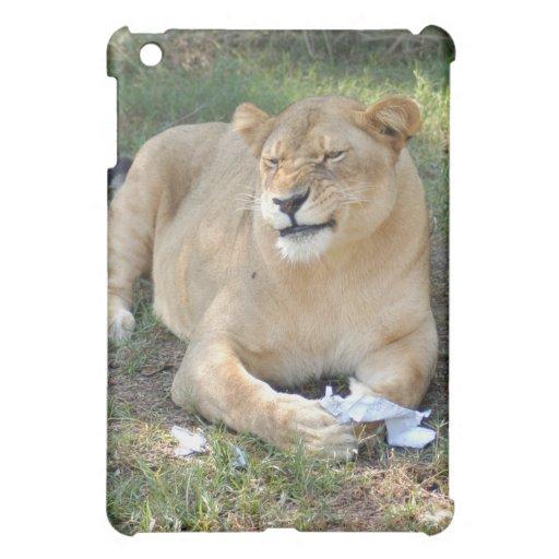 León de Barbary
