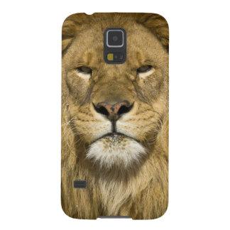 León de Barbary del africano, Panthera leo leo, Funda Galaxy S5