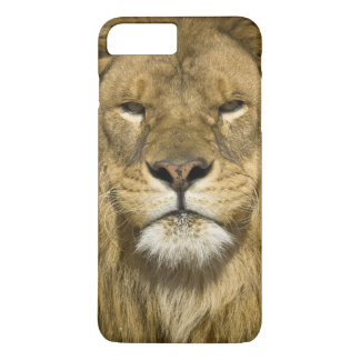 León de Barbary del africano, Panthera leo leo, Funda iPhone 7 Plus