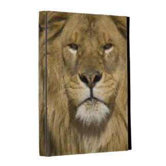 León de Barbary del africano, Panthera leo leo, un