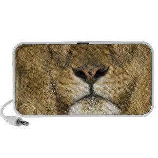 León de Barbary del africano, Panthera leo leo, un iPhone Altavoces