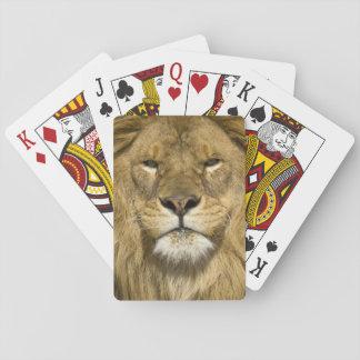 León de Barbary del africano, Panthera leo leo, un Cartas De Juego