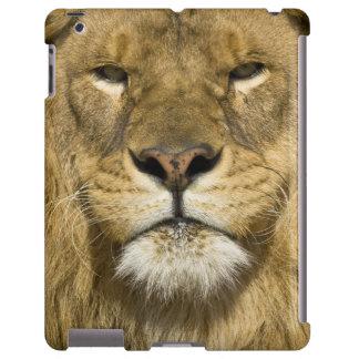 León de Barbary del africano, Panthera leo leo, un Funda Para iPad