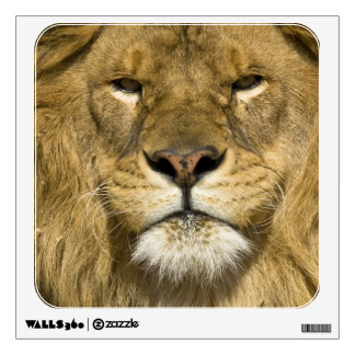 León de Barbary del africano, Panthera leo leo, un Vinilo Adhesivo