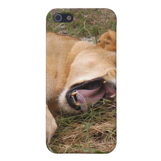 León de Barbary i iPhone 5 Protectores