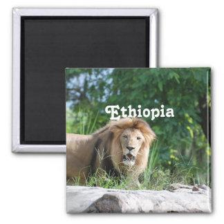 León de Etiopía Imán Cuadrado