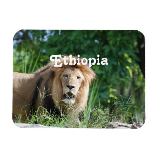 León de Etiopía Iman Flexible