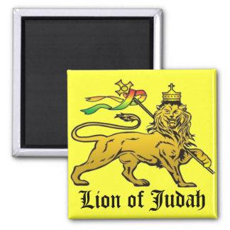 León de Judah Imán Cuadrado