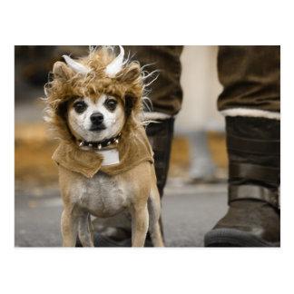 León de la chihuahua con los cuernos postales