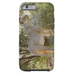 león de la leona, Panthera leo, Kgalagadi Funda Para iPhone 6 Tough