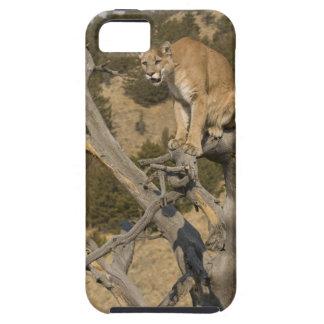 León de montaña, aka puma, puma; Concolor del Funda Para iPhone SE/5/5s