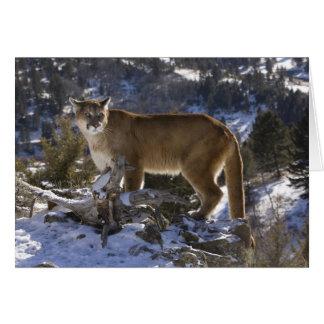 León de montaña, aka puma, puma; Concolor del puma Tarjeta De Felicitación