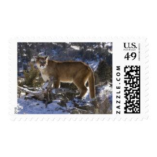 León de montaña, aka puma, puma; Concolor del Timbre Postal