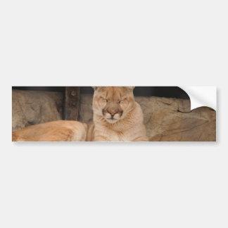 León de montaña pegatina de parachoque